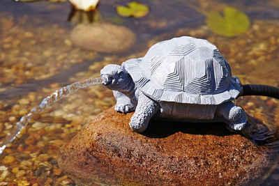 OASE Wasserspeier »Schildkröte«