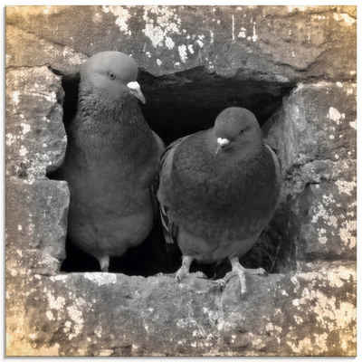 Artland Glasbild »Tauben Liebe«, Vögel (1 Stück)