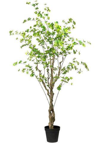 Creativ green Kunstbaum »Louisiana-Baum« Louisiana-B...