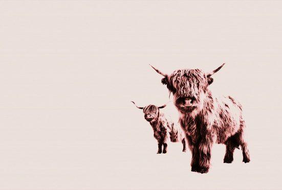 living walls Fototapete »ARTist Highland Cows«, (Set, 4 St), Hochland Rinder, Vlies, glatt