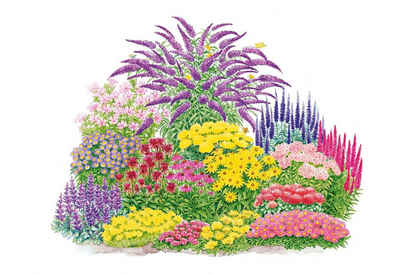 BCM Beetpflanze »Schmetterling« Set, bunt gemischt