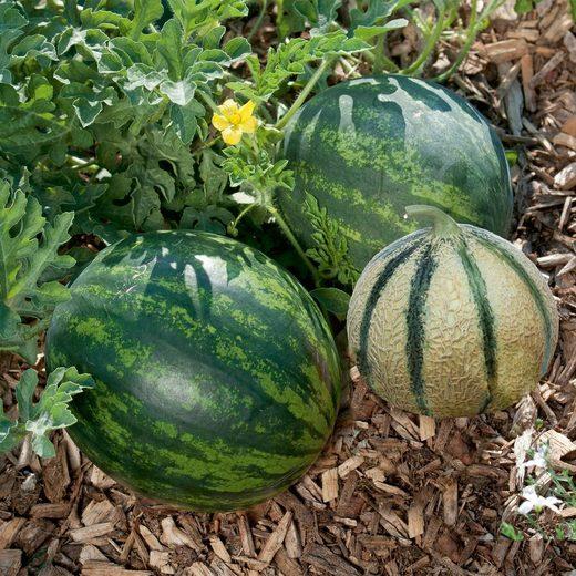 VOLMARY Set: Melone , 3 Sorten im Mix