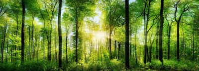 Victor (Zenith) Acrylglasbild »Wald mit Sonnenstrahlen«, Wald, Glasbild Wald, Bild Wohnzimmer, Landschaften, Natur, Wanddeko