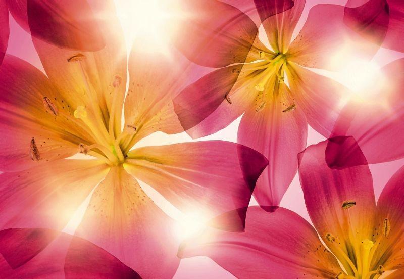 Fototapete, Komar, »Summer Sun«, 368/254 cm