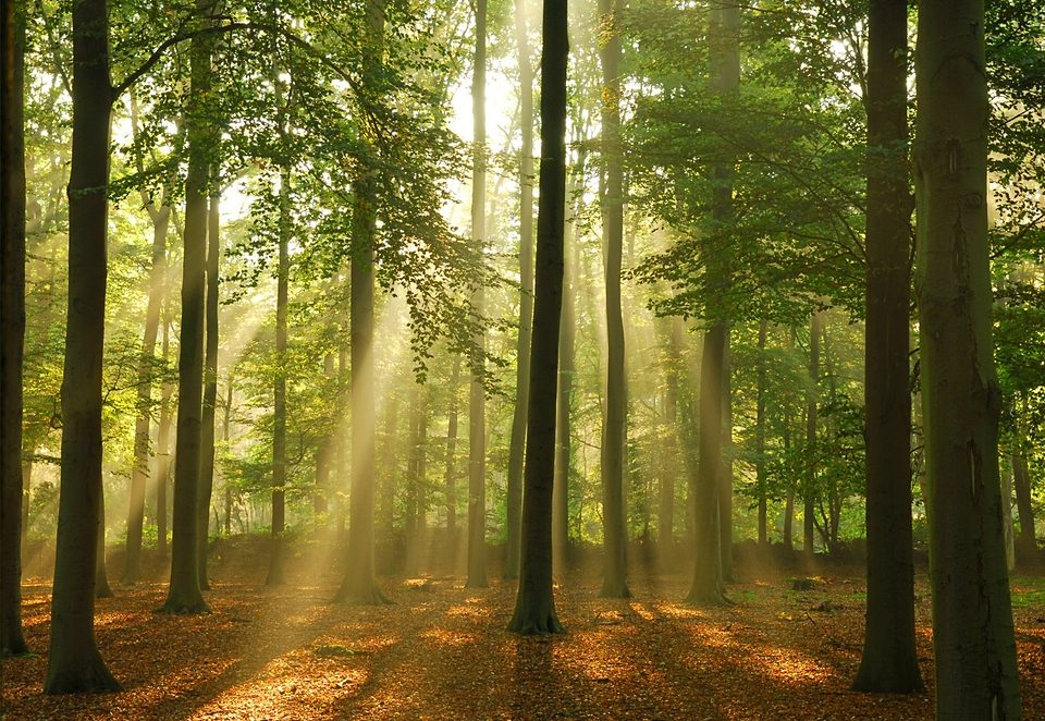 Home affaire Fototapete »Wald«, 272/198 cm