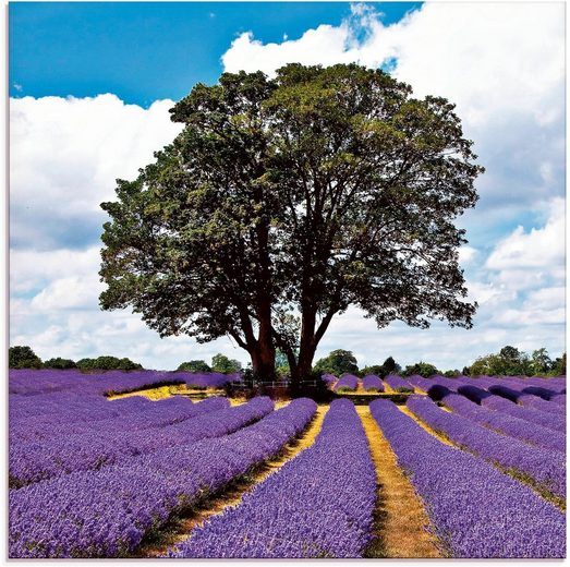 Artland Glasbild »Schönes Lavendelfeld im Sommer«, Felder (1 Stück)