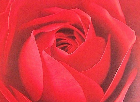 Kunstdruck »Ce la Rose«, (1 Stück)