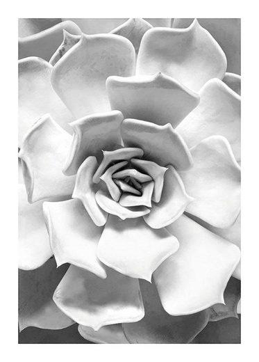 Komar Poster »Succulent Closeup«, Pflanzen, Blätter, Höhe: 70cm