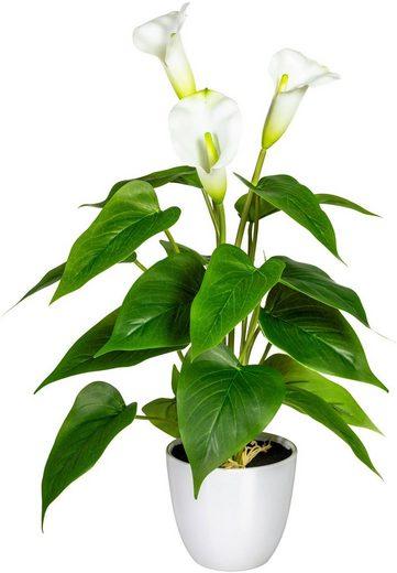 Künstliche Zimmerpflanze »Lesum« Calla, DELAVITA, Höhe 44 cm