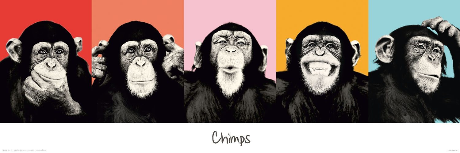 Bild, Home affaire, »The Chimp - compilation«, 90/30 cm