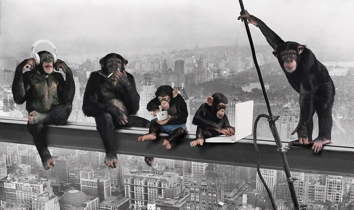 Bild, Home affaire, »The Chimp - girder«, 118/70 cm