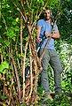 GARDENA Astschere »SlimCut, 12010-20«, Bypass, bis max. Ast-Ø 28 mm, Bild 6