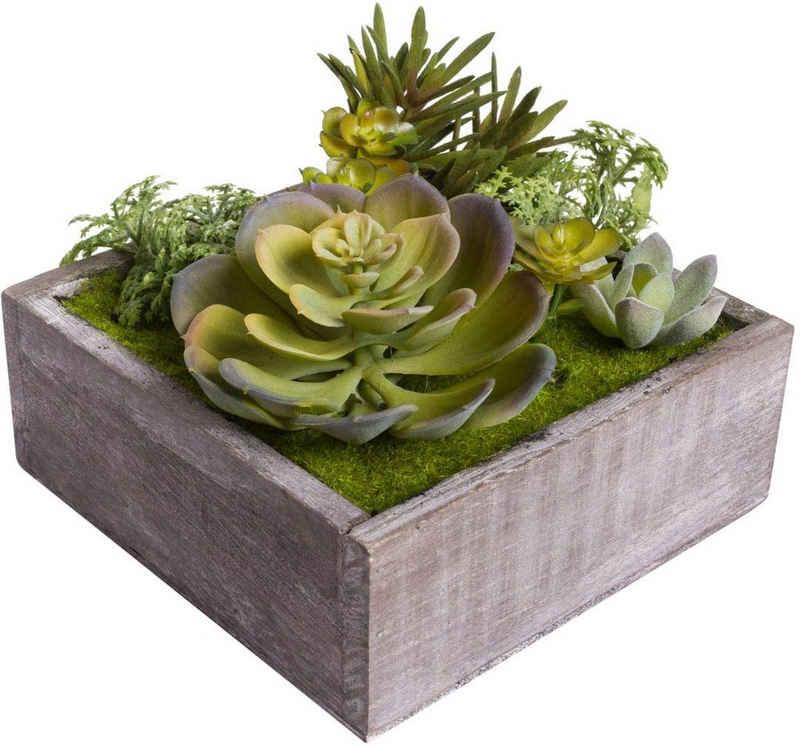 Kunstkaktus »Sukkulenten« Sukkulente, Botanic-Haus, Höhe 11 cm