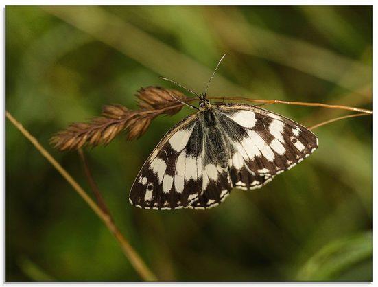 Artland Glasbild »Schmetterling«, Insekten (1 Stück)