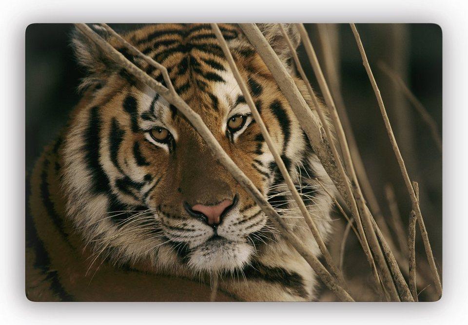Glasbild, Home affaire, »Tiger«, 60/40 cm in braun