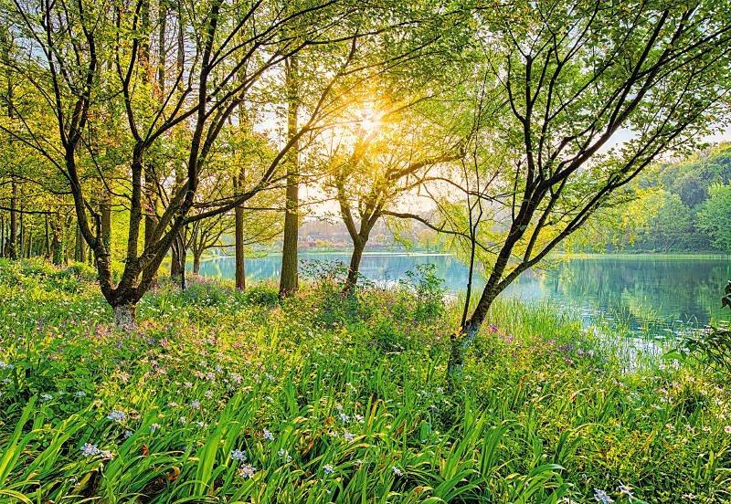 Fototapete, Komar, »Spring Lake« 368/254 cm in bunt