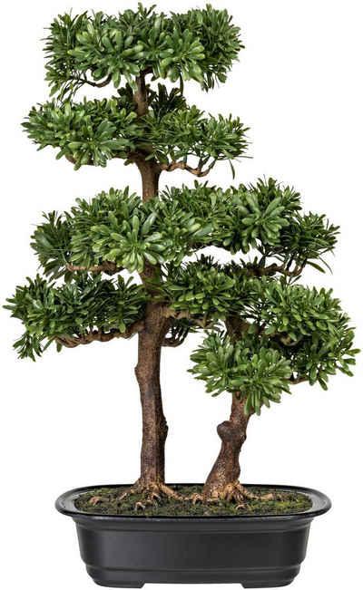 Kunstbonsai »Houghton« Bonsai Podocarpus, Home affaire, Höhe 45 cm, in Kunststoffschale