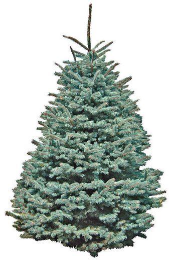 Weihnachtsbaum »Edeltanne«, frisch geschlagen, Höhe: 150-160 cm