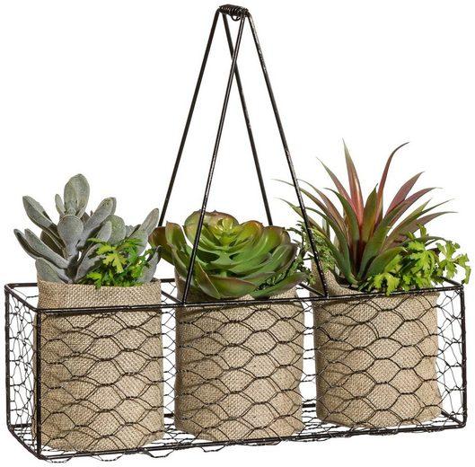 Kunstpflanze »Sukkulenten«, Creativ green, Höhe 27 cm