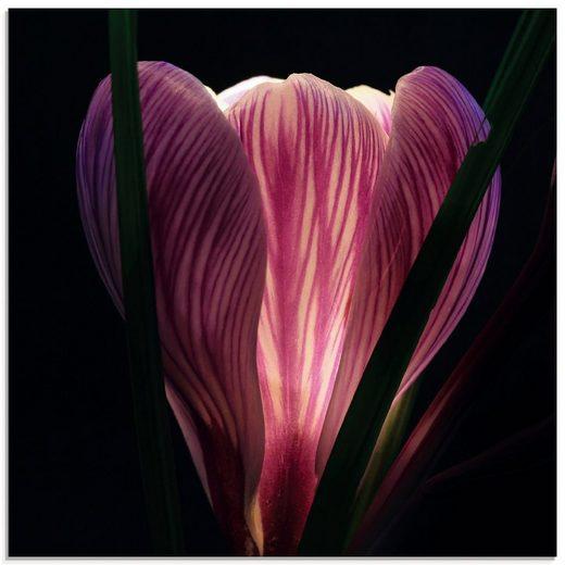 Artland Glasbild »Beleuchtet«, Blumen (1 Stück)