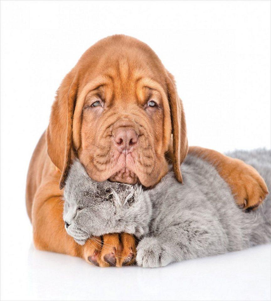 Hunde für allergiker geeignet