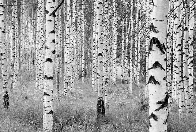 Komar Vlies-Fototapete Woods 368x248 cm, 4-tlg.