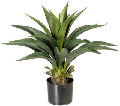 Künstliche Zimmerpflanze »Svala« Agave, andas, Höhe 56 cm