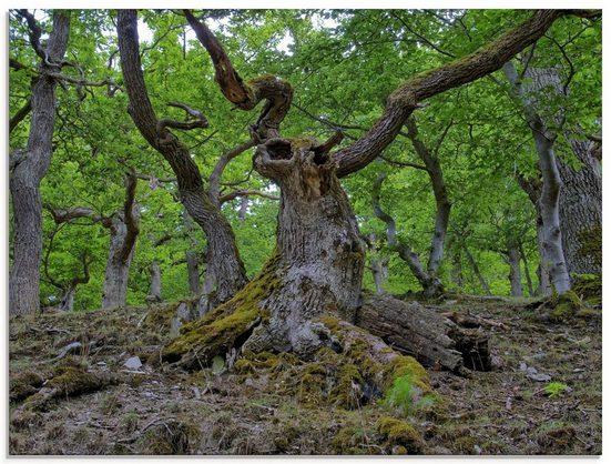 Artland Glasbild »Eichen wie ein Märchenwald«, Wald (1 Stück)