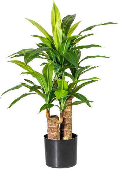 Künstliche Zimmerpflanze »Corentin« Dracena, Home affaire, Höhe 80 cm