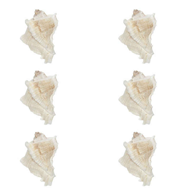 Clayre & Eef Möbelknopf, 6er-Set Grosse Möbelknöpfe, Modell MARE, Muschel Design 7x 6 cm, Keramik, maritimer Stil, Shabby-Chic, Vintage, als Griffe zum Aufziehen