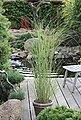 BCM Gräser »Chinaschilf sinensis 'Gracillimus'«, Lieferhöhe ca. 60 cm, 1 Pflanze, Bild 2