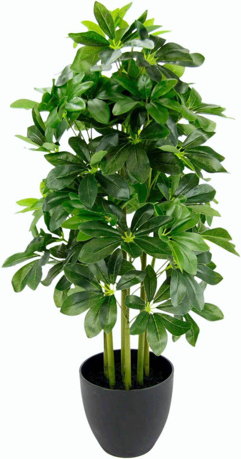 Kunstpflanze »Schefflerapflanze«, I.GE.A., Höhe 83 cm, im Kunststofftopf