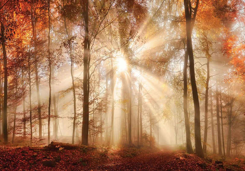 Consalnet Fototapete »Sonniger Wald im Herbst«, glatt, Motiv