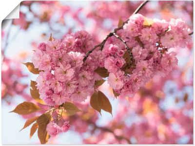 Artland Wandbild »Japanische Kirschblüte in Love I«, Blumen (1 Stück), in vielen Größen & Produktarten -Leinwandbild, Poster, Wandaufkleber / Wandtattoo auch für Badezimmer geeignet
