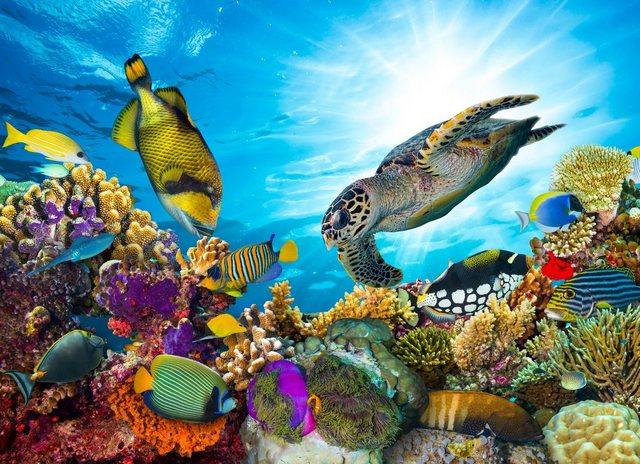 PAPERMOON Fototapete »Coral Reef Fiji«  Vlies  in verschiedenen Größen   Baumarkt > Malern und Tapezieren   Papermoon