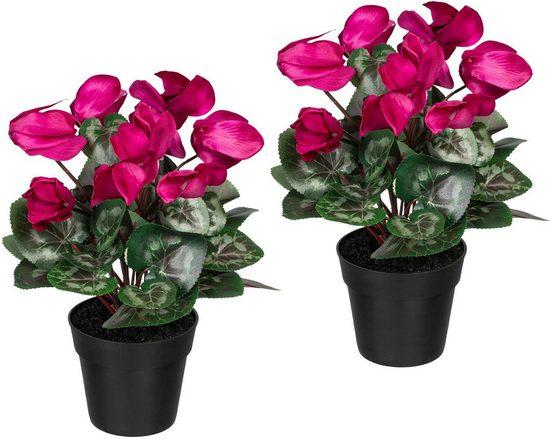 Künstliche Zimmerpflanze »Alpenveilchen« Alpenveilchen, Creativ green, Höhe 30 cm, 2er Set