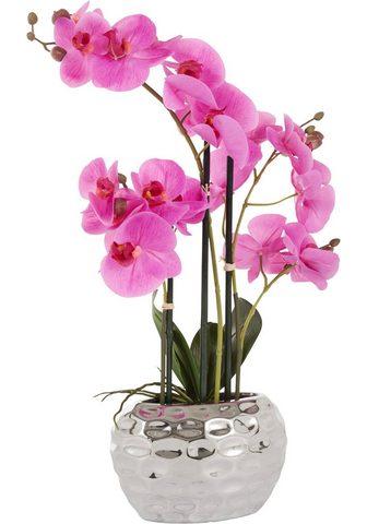 Leonique Kunstpflanze »Orchidee« Orchidee aukšt...