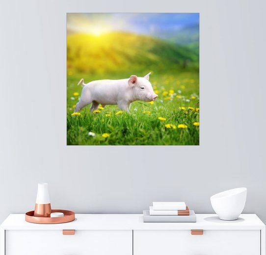 Posterlounge Wandbild, Schweinchen Spaziergang