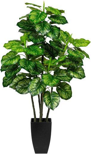 Künstliche Zimmerpflanze »Maranta« Maranta, Creativ green, Höhe 105 cm