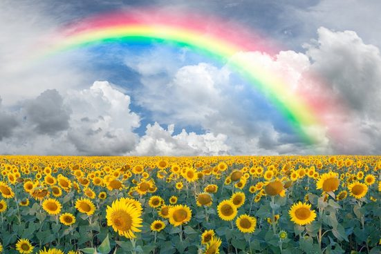 Papermoon Fototapete »Rainbow Sunflowers«, glatt
