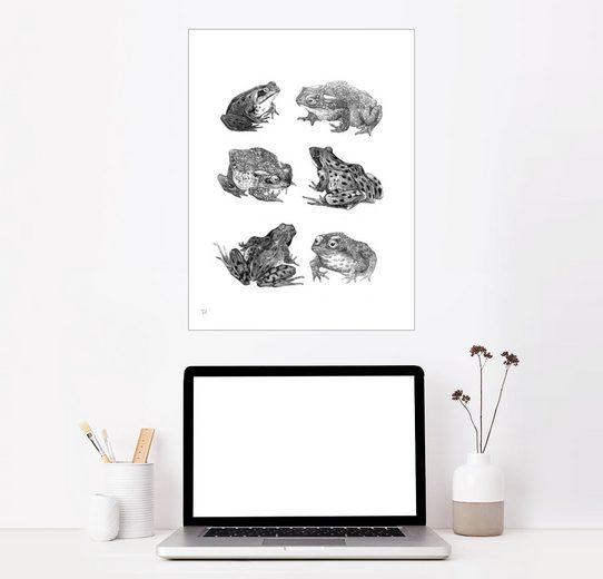 Posterlounge Wandbild, Sechs Frösche und Kröten