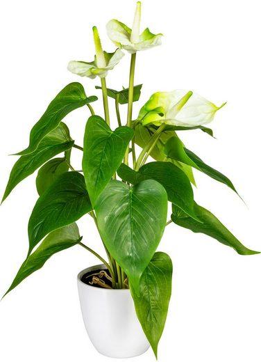 Künstliche Zimmerpflanze »Haune« Anthurie, DELAVITA, Höhe 40 cm