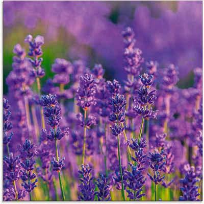 Artland Glasbild »Lavendelfeld in Tihany, Ungarn«, Felder (1 Stück)