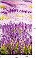 BODENMEISTER Fototapete »Lavendel Provence lila«, Rolle 2,80x1,59m, Bild 4