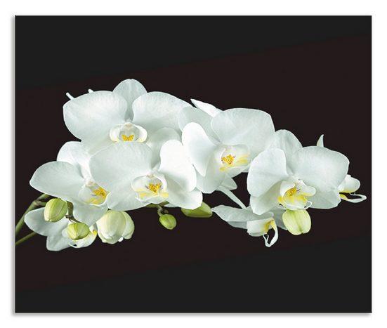 Artland Küchenrückwand »Weiße Orchidee auf schwarzem Hintergrund«, (1-tlg)