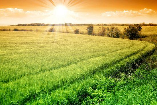 PAPERMOON Fototapete »Field of Fresh Grain«, Vlies, in verschiedenen Größen