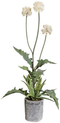 Kunstpflanze »Distelbusch« Kunstblume, Creativ green, Höhe 70 cm, im Zementtopf, Durchmesser 70 cm, creme