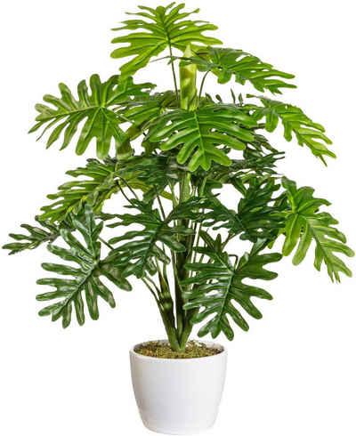Künstliche Zimmerpflanze »Agneta« Monstera, andas, Höhe 50 cm, im Keramiktopf