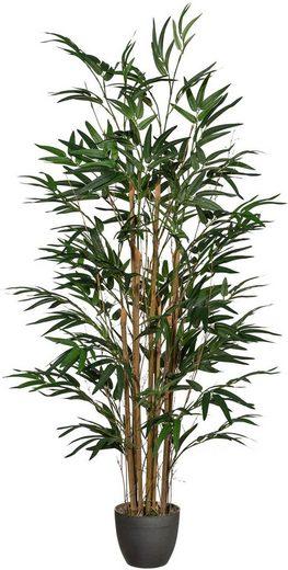 Kunstpflanze »Bambus« Bambus, Creativ green, Höhe 120 cm