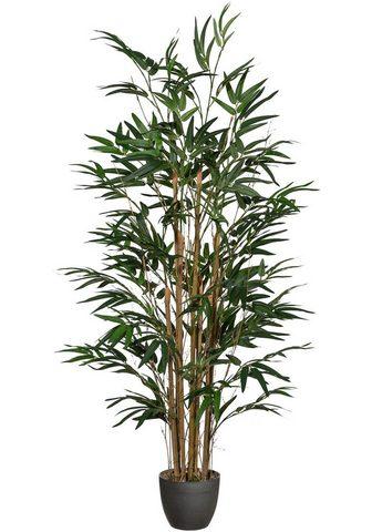 Creativ green Kunstpflanze »Bambus« Bambus aukštis 1...